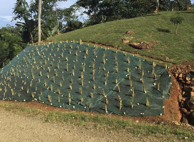 Proyecto de control de erosión Zona Sur, Costa Rica
